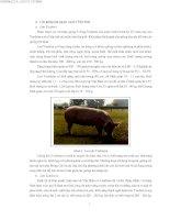 Kỹ thuật chăn nuôi lợn nái sinh sản part 2 ppsx