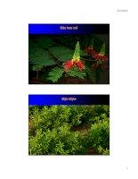 Bài giảng cây thức ăn : Một số cây đậu sử dụng trong chăn nuôi part 2 doc