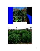 Bài giảng cây thức ăn : Đặc điểm sinh trưởng và phát triển của cây thức ăn chăn nuôi part 6 ppt