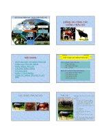 Chăn nuôi trâu bò : Giống và công tác giống trâu bò part 1 docx