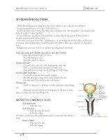 CƠ QUAN SINH DỤC NAM pdf