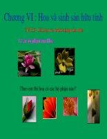 bài giảng sinh học lớp 6 các loại rễ các miền của rễ