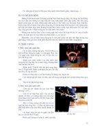 Giáo trình bệnh nội khoa gia súc part 4 ppt