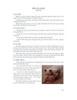 Giáo trình bệnh nội khoa gia súc part 9 pot