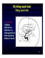 Bài giảng : Giải phẫu thần kinh đối chiếu chẩn đoán Hình ảnh part 3 doc