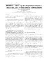 BÁO CÁO NGHIÊN CỨU KHOA HỌC KỸ THUẬT: TÌNH HÌNH GÂY HẠI CỦA RUỒI ĐỤC LÁ RAU Liriomyza sativae B. (AGROMYZIDAE: DIPTERA) Ở THÀNH PHỐ HỒ CHÍ MINH NĂM 2002 doc