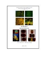 Giáo trình thực tập công nghệ chế biến rau quả - Bài 1 docx