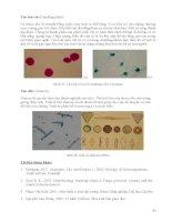 Giáo trình Vi sinh đại cương part 5 pptx