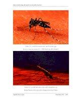 Luận văn : Khảo sát khả năng diệt muỗi của chế phẩm Enchoice part 3 pptx