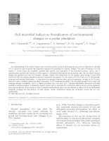 Soil microbial indices as bioindicators of environmental changes in a poplar plantation pot