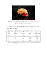 Luận văn : KHẢO SÁT ẢNH HƯỞNG CỦA VI KHUẨN METHYLOBACTERIUM SP. LÊN SỰ PHÁT SINH CƠ QUAN Ở CÂY LÚA (Ozyra sativa L) NUÔI CẤY IN VITRO part 3 ppsx