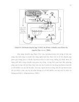 Luận văn : NGHIÊN CỨU KHẢ NĂNG CHUYỂN NẠP GEN CỦA HAI GIỐNG BÔNG VẢI SSR60F VÀ COKER 312 BẰNG VI KHUẨN Agrobacterium tumefaciens part 4 pptx