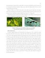 Luận văn : SỬ DỤNG KỸ THUẬT DAS-ELISA VÀ RT-PCR ĐỂ PHÁT HIỆN VIRUS GÂY BỆNH ĐỐM VÕNG TRÊN CÂY ĐU ĐỦ (Papaya ringspot virus) TẠI HAI TỈNH ĐỒNG NAI VÀ ĐỒNG THÁP part 4 potx