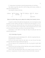 Luận văn : BƯỚC ĐẦU NGHIÊN CỨU SẢN XUẤT BỘT CACAO BẰNG PHƯƠNG PHÁP LÊN MEN CÓ BỔ SUNG VI SINH VẬT part 4 pps