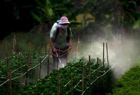 """""""Đánh giá ảnh hưởng của hóa chất bảo vệ thực vật tồn lưu đến môi trường đất  tại các kho lưu trữ hóa chất bảo vệ thực vật trên địa bàn thành phố thái nguyên tỉnh thái nguyên"""""""