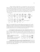 Hình thái giải phẫu thực vật phần 9 pdf