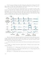 Bệnh học và điều trị nội khoa part 3 ppt
