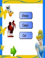 animal quiz doc