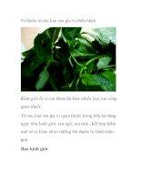 Vị thuốc từ các loại rau gia vị chữa bệnh pot
