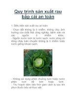 Quy trình sản xuất rau bắp cải an toàn pdf