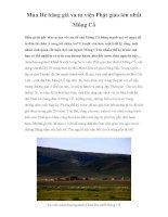 Mùa Hè băng giá và tu viện Phật giáo lớn nhất Mông Cổ docx