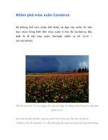 Khám phá mùa xuân Canberra pot