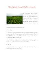 Những kỹ thuật trồng ngô (bắp) lai vụ đông-xuân pptx