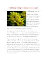 Kỹ thuật trồng và chăm sóc hoa cúc docx