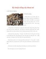 Kỹ thuật trồng cây khoai mì pot