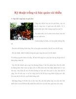 Kỹ thuật trồng và bảo quản vải thiều doc