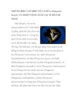 NHỮNG ĐIỀU CẦN BIẾT VÊ CÁ DỨA (Pangasius kunyit) VÀ TRIỂN VỌNG NUÔI TẠI TP HỒ ppt