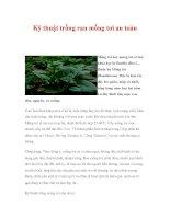Kỹ thuật trồng rau mồng tơi an toàn pps