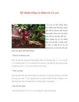 Kỹ thuật trồng và chăm sóc Ca cao pps