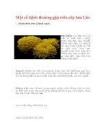 Một số bệnh thường gặp trên cây hoa Cúc pptx