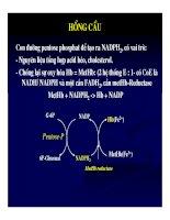 Bài giảng sinh hóa - Máu và dịch não part 8 pdf