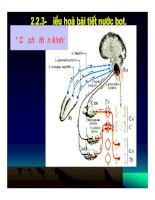 Bài giảng đại cương sinh lý tiêu hóa part 4 doc