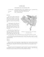 Tài liệu về kỹ thuật trồng, đặc điểm sinh lý và phân bố của cây Muồng Đưn pot