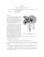 Tài liệu về kỹ thuật trồng, đặc điểm sinh lý và phân bố của cây Cọ Bầu pdf