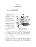 Tài liệu về kỹ thuật trồng, đặc điểm sinh lý và phân bố của cây Chiêu Liêu potx
