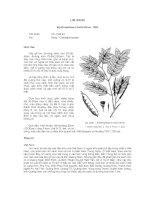 Tài liệu về kỹ thuật trồng, đặc điểm sinh lý và phân bố của cây Lim Xanh pptx