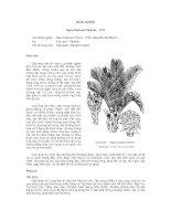 Tài liệu về kỹ thuật trồng, đặc điểm sinh lý và phân bố của cây Dừa Nước doc