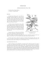 Tài liệu về kỹ thuật trồng, đặc điểm sinh lý và phân bố của cây Giổi Ăn Quả ppt