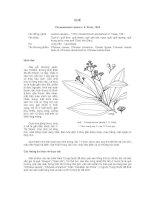 Tài liệu về kỹ thuật trồng, đặc điểm sinh lý và phân bố của cây Quế potx