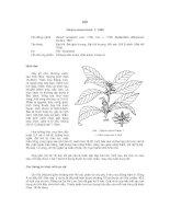 Tài liệu về kỹ thuật trồng, đặc điểm sinh lý và phân bố của cây Hồi ppt