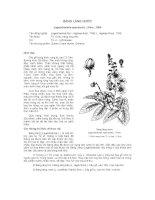 Tài liệu về kỹ thuật trồng, đặc điểm sinh lý và phân bố của cây Bằng Lăng Nước pps
