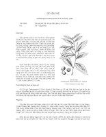Tài liệu về kỹ thuật trồng, đặc điểm sinh lý và phân bố của cây Dẻ Yên Thế ppsx
