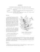 Tài liệu về kỹ thuật trồng, đặc điểm sinh lý và phân bố của cây Quế Rành pps