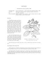 Tài liệu về kỹ thuật trồng, đặc điểm sinh lý và phân bố của cây Quế Quan ppsx
