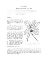 Tài liệu về kỹ thuật trồng, đặc điểm sinh lý và phân bố của cây Đước Nhọn docx