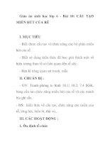 Giáo án sinh học lớp 6 - Bài 10: CẤU TẠO MIỀN HÚT CỦA RỄ ppt